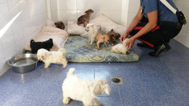 I cuccioli sequestrati dai carbinieri