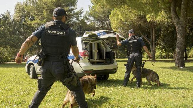 La Polizia locale all'opera
