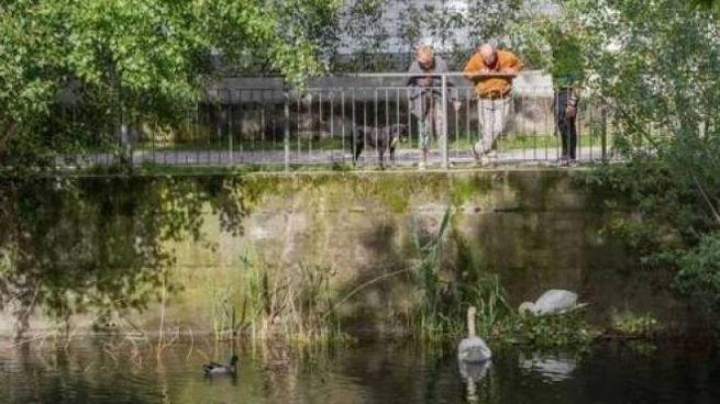 L'oasi dei cigni a Dervio