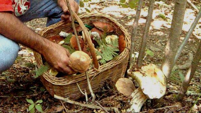 Far controllare sempre i funghi raccolti