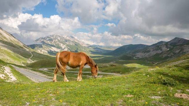 Cavalli al pascolo nella piana di Campo Imperatore