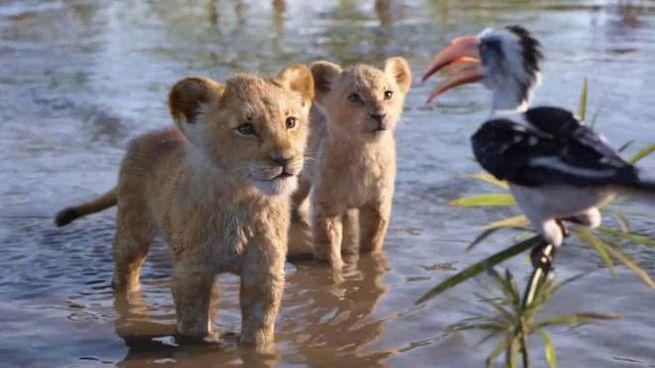 Una scena del film 'Il re leone' - Foto: Walt Disney Pictures