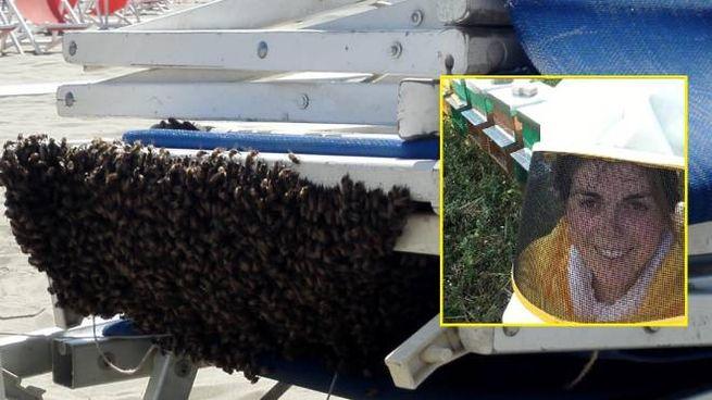 Alcune delle api sulla sdraio e, nel riquadro, Sara Gelli