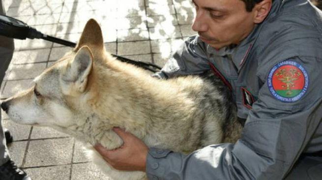Il cane salvato dall'intervento dei carabinieri forestali