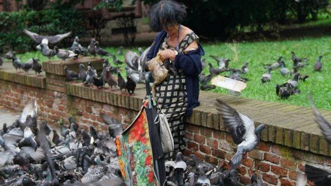 Saronno, pugno di ferro contro i piccioni