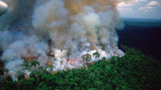 Risultati immagini per Amazzonia in fiamme immagini