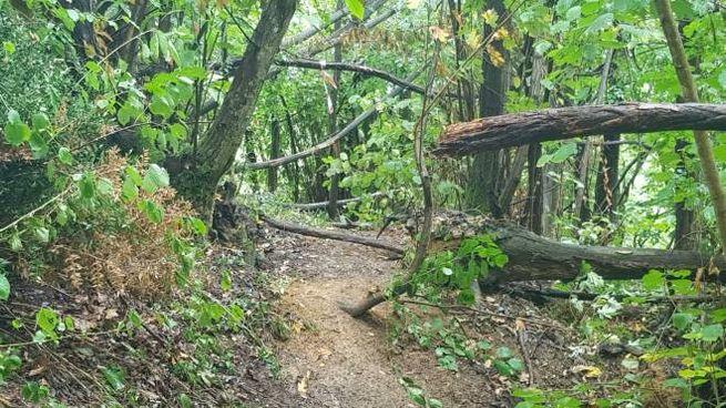 I boschi in cui Massimo Sebastiani ha nascosto il cadavere di Elisa Pomarelli