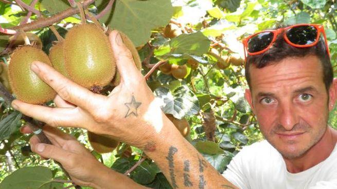 La cimice asiatica è un flagello per i frutteti (Foto Corelli)