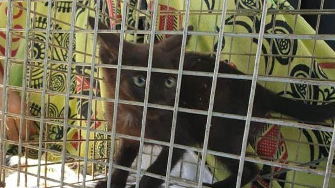 Uno dei gattini recuperarti nell'ex campo rom di Oratoio