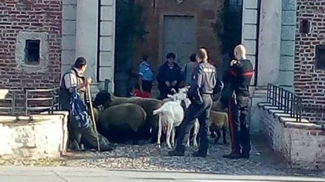 La protesta con le pecore davanti al municipio di Fagnano Olona (foto Facebook)