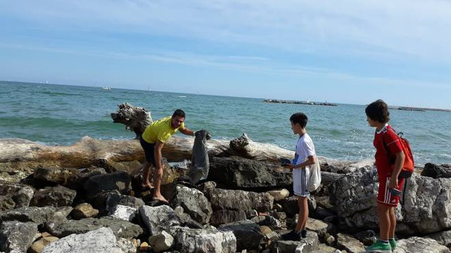 Pulizia spiaggia Baia Flaminia