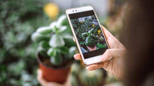 Come riconoscere e curare le piante di casa con le app