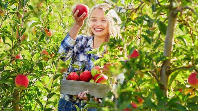 Sagra delle mele in Val di Non  (foto di Pomaria)