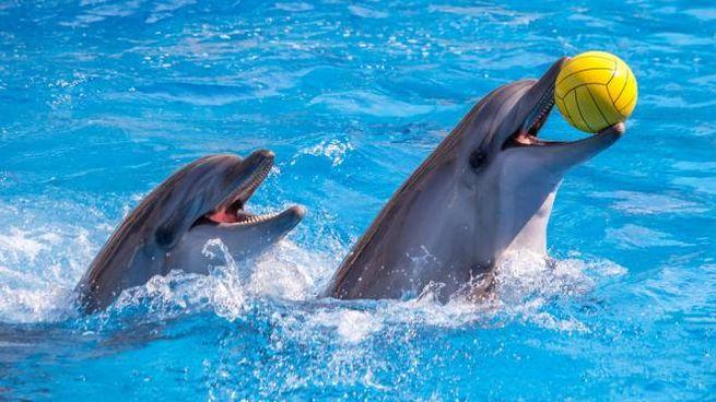 Tripadvisor ha adottato una nuova politica a difesa dei cetacei in cattività