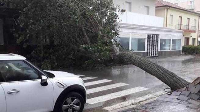 Maltempo Rimini, uno degli alberi crollati a Torre Pedrera