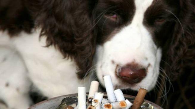 Fumo passivo: no grazie