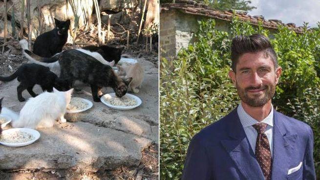 Baccini, sindaco di Bagno di Romagna, pronto ad accogliere 20 gatti