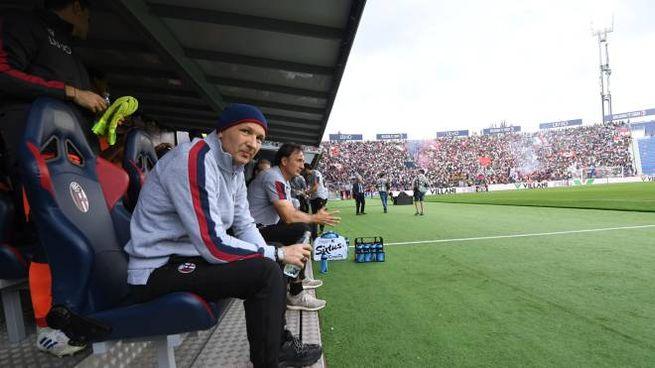 Sinisa Mihajlovic è tornato in panchina al Dall'Ara per Bologna-Lazio (FotoSchicchi)