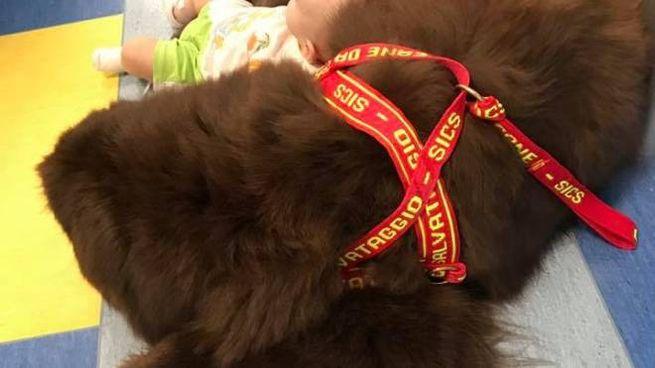 Cani eroi: Al, Terranova femmina della Sics