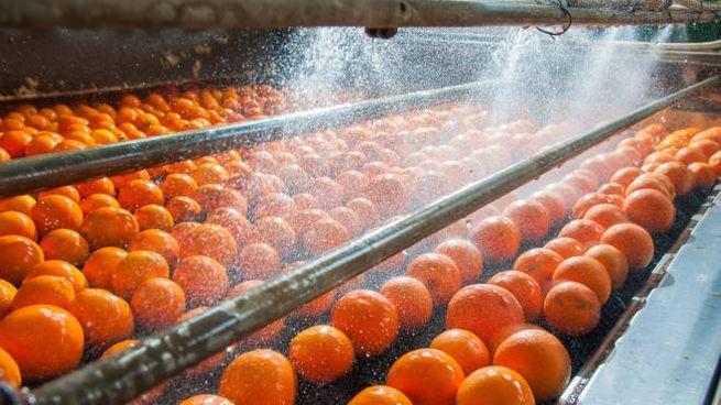 Per 250 ml di spremuta d'arancia servono 100 litri di acqua