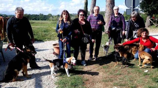 Passeggiata coi cani