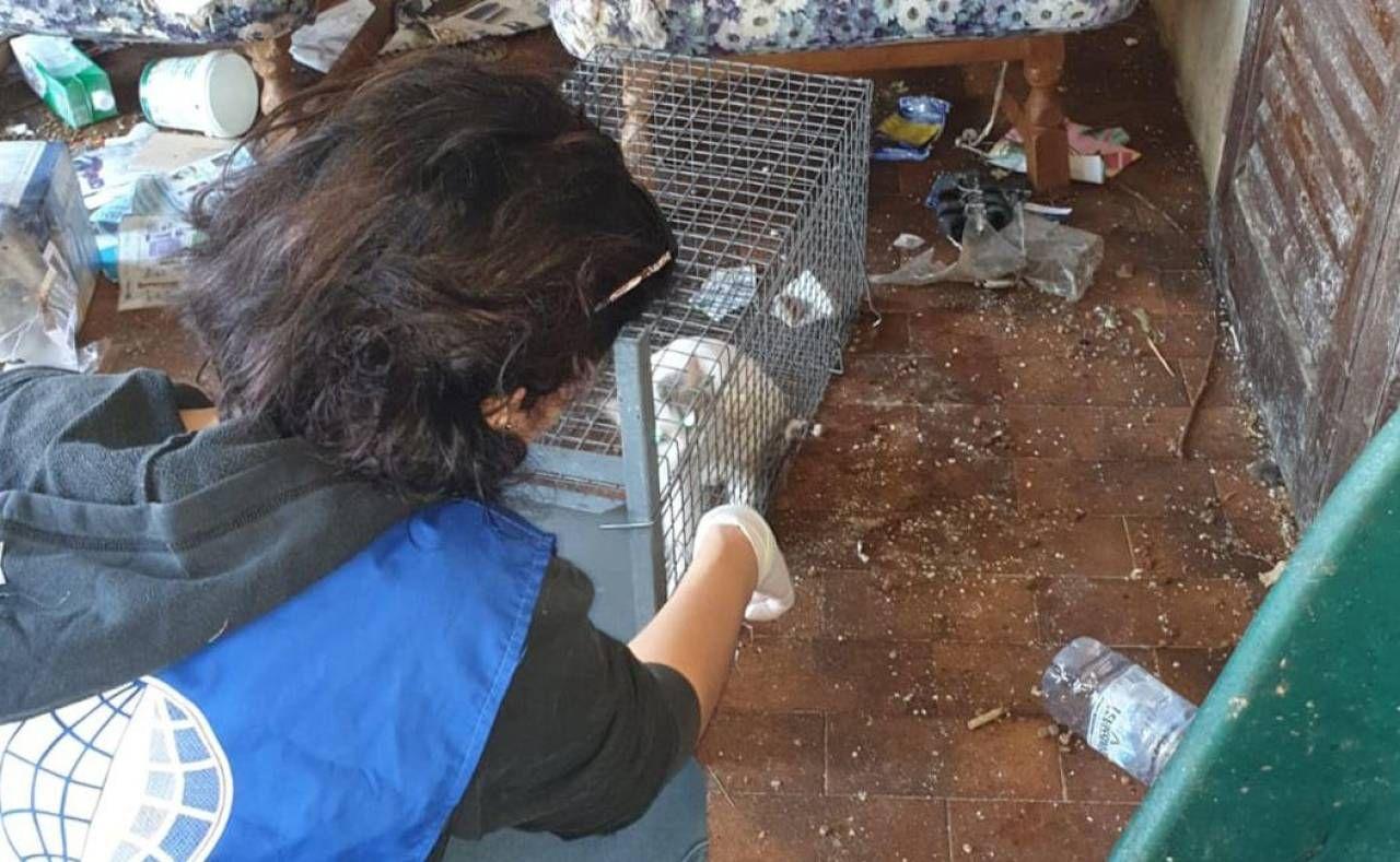 Il sequestro dei gatti dopo l'intervento delle guardie zoofile nell'abitazione