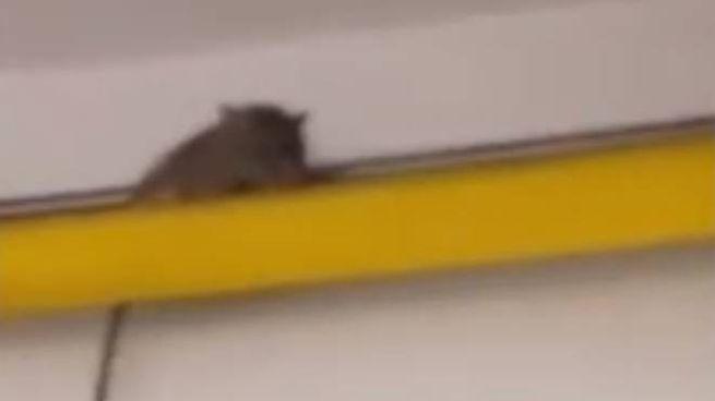 Il topo filmato dai ragazzi dell'alberghiero