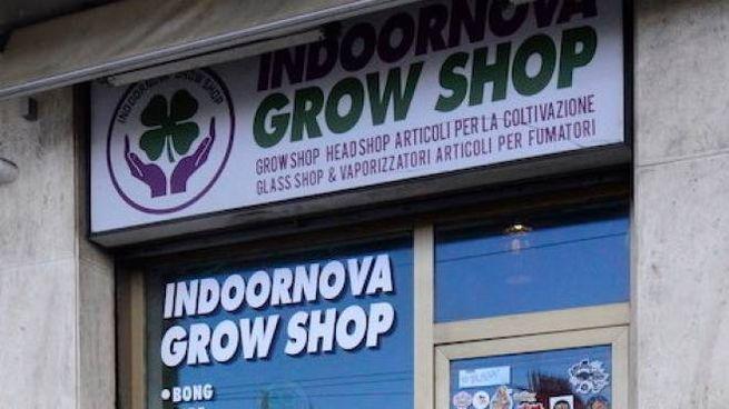 Cannabis light, il Grow Shop di Ancona
