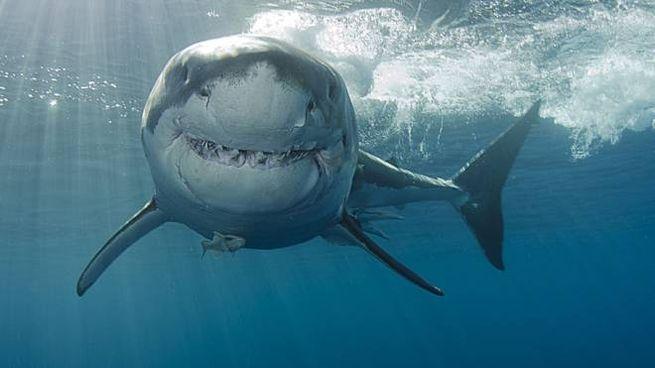 Gli straordinari ritratti di squali del fotografo Euan Rannachan