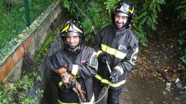 Il chihuahua Rex tra le braccia dei soccorritori
