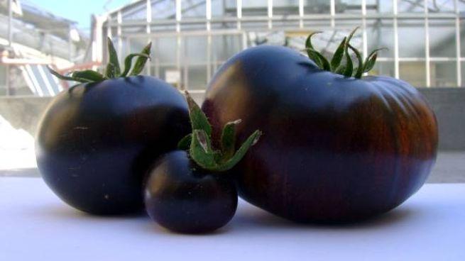 Pomodori viola