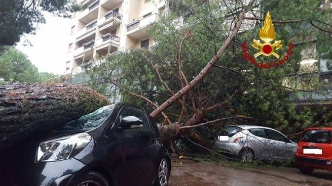 Il pino che si è abbattuto sulle auto in sosta