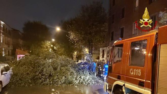 Meteo, a Bologna il maltempo fa danni: l'albero caduto in via Bentivogli