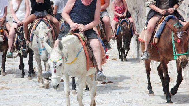 Gli asini-taxi dell'isola di Santorini