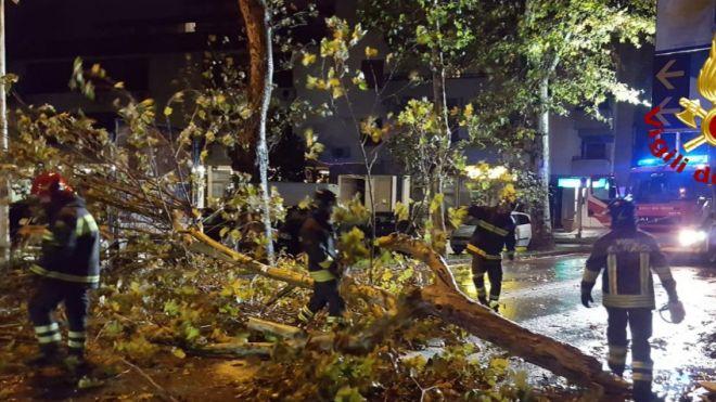 Paura a Prato, albero cade sulla strada - La Nazione