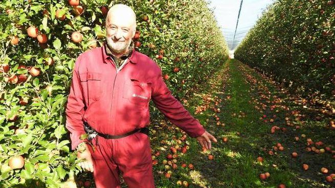 Claudio Tabanelli, imprenditore agricolo, indica le mele a terra