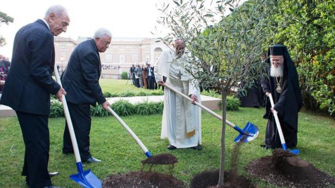 Il Papa nel 2014 piantò un ulivo per la pace in Palestina con i leader dei due Paesi