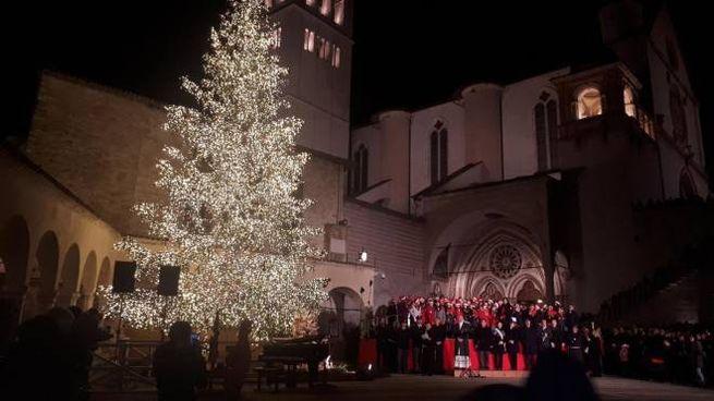L'accensione dell'albero di Assisi