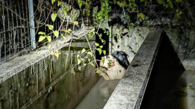 I due cani caduto nella vasca per irrigazione