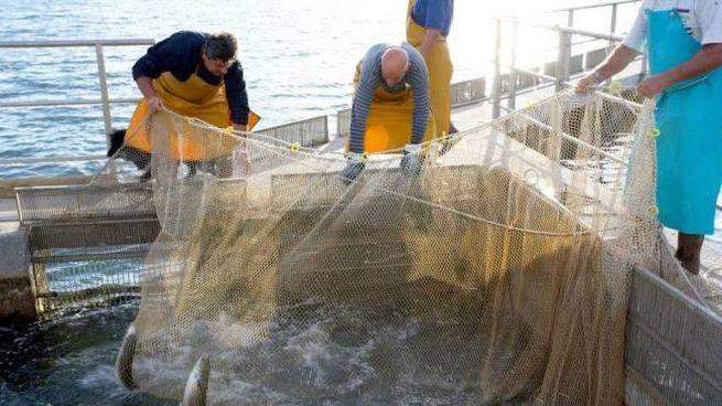 L'obiettivo è sostenere anche l'attività dei pescatori