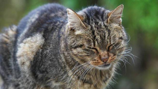 Un gatto di strada in una foto L.Gallitto
