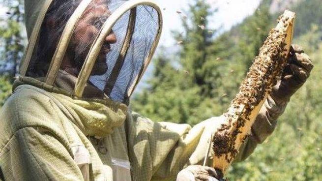 Giacomo Dell'Orto, 38 anni, produce miele biologico