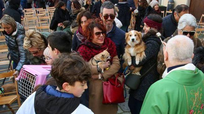 La benedizione degli animali a Fucecchio (Foto Germogli)
