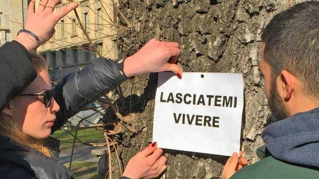Monta la protesta per il taglio delle piante di piazza dante