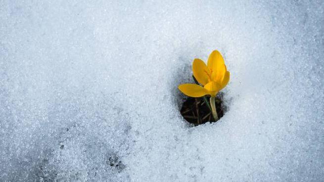 Primavera anticipata (iStock)