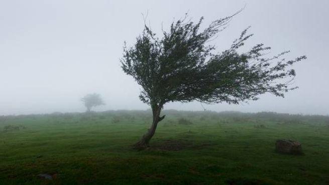 Raffiche di vento (foto di repertorio)