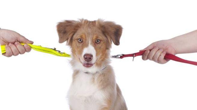 Le coppie si scontrano spesso sulla gestione del cane di casa