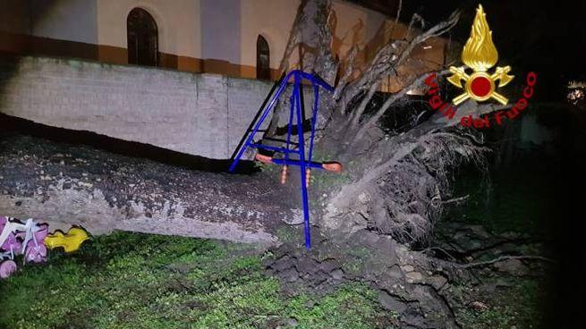 Il cedro caduto in via Mazzini