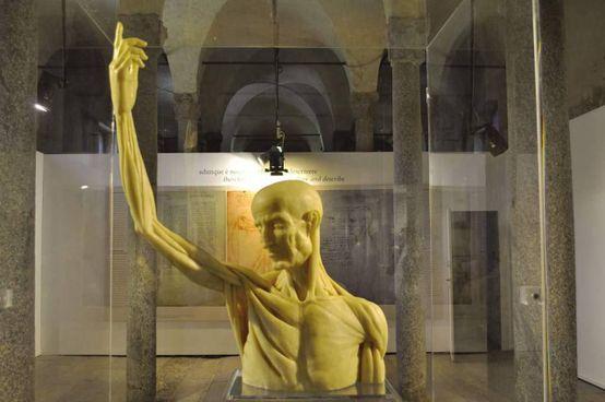 La mostra pone a confronto Guido da Vigevano e Leonardo da Vinci e i loro metodi di raffigurazione anatomica