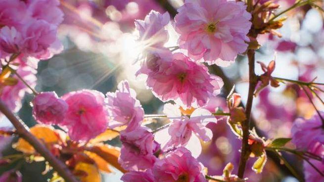 20 marzo 2020: equinozio di primavera